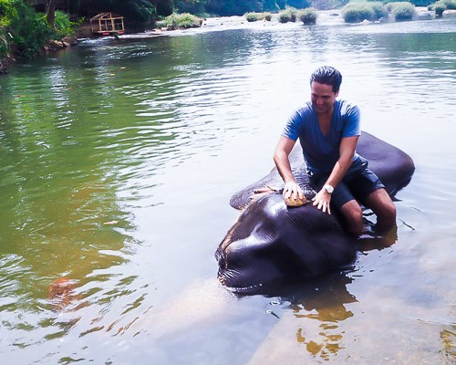 sri lanka elephane