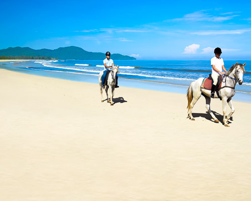 borneo-horses