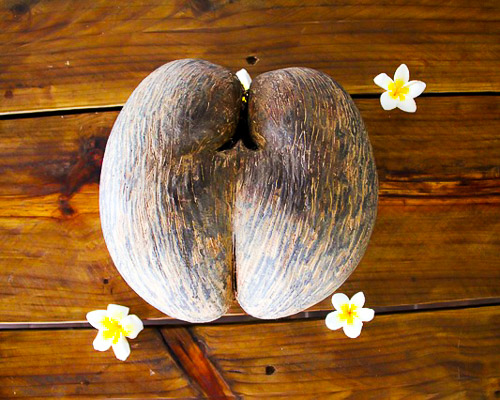 coconut-seychelles