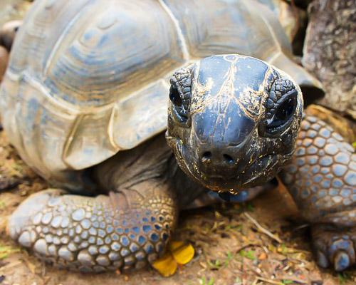 turtle-seychelles